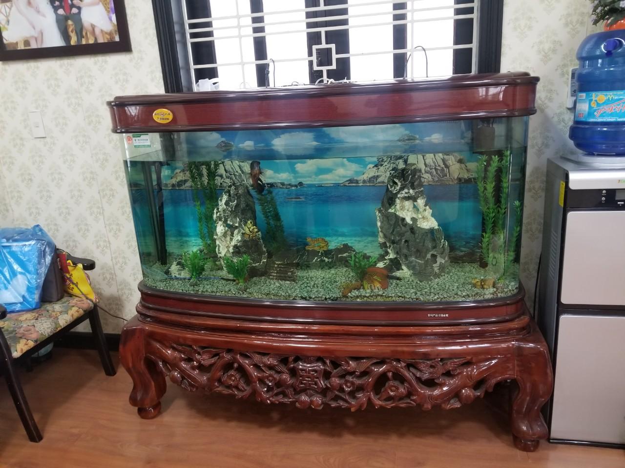 Bể cá cảnh thanh lý giá rẻ - Đồ Cũ Hoàng Quỳnh - 25A Trại Lẻ - docuhaiphong.vn - 0913040613